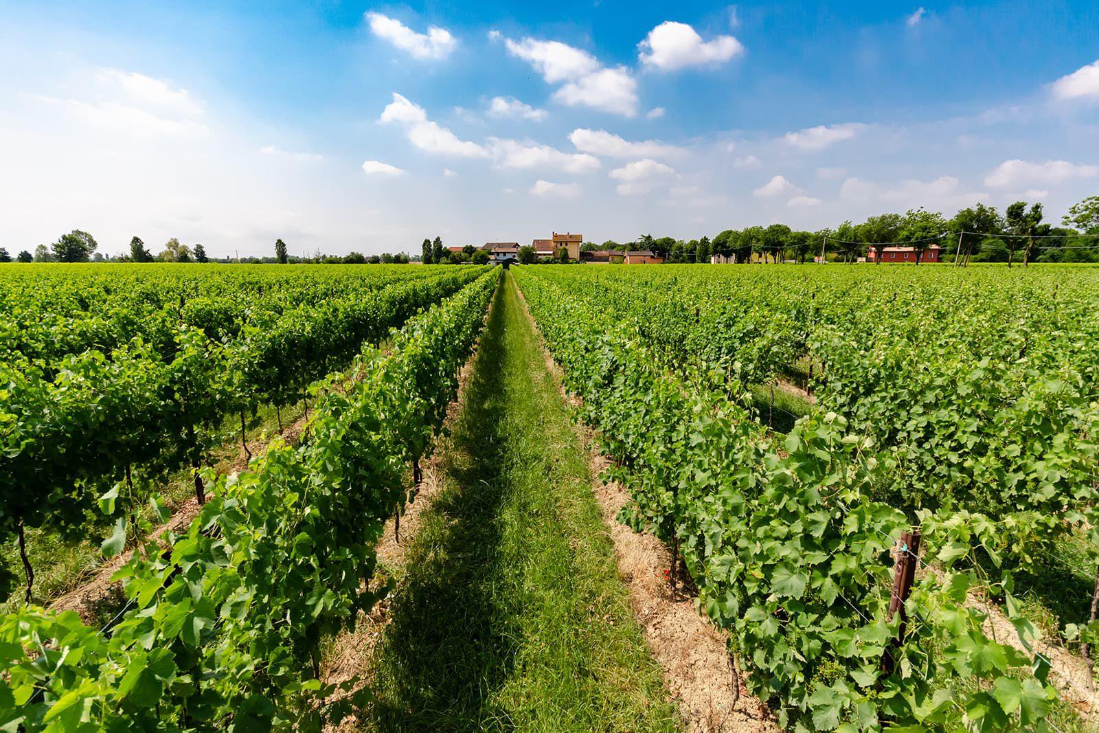 360° vineyard photo