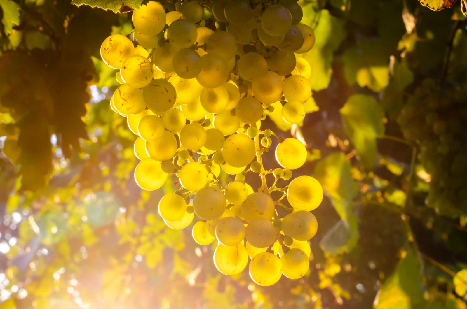 Prosecco e vini del Piave Terre di Rai